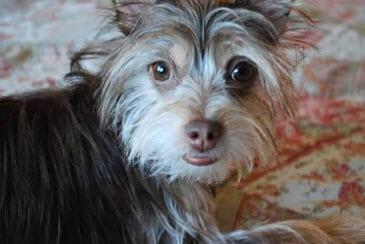 Otter Pup aka Nervous Nellie