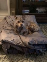chloe-blanket
